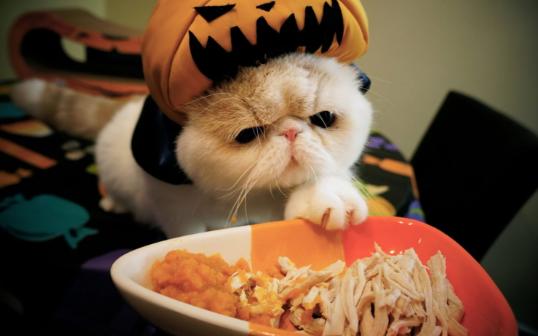 Cara Mengganti Makanan Kucing