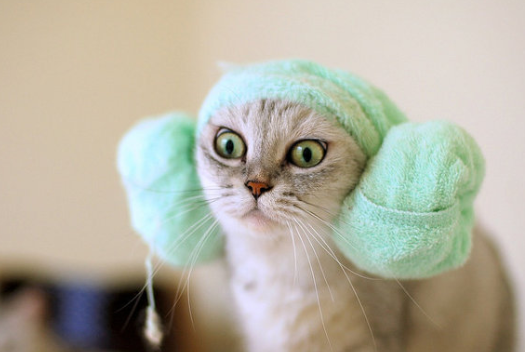 Hair Dryer Kucing