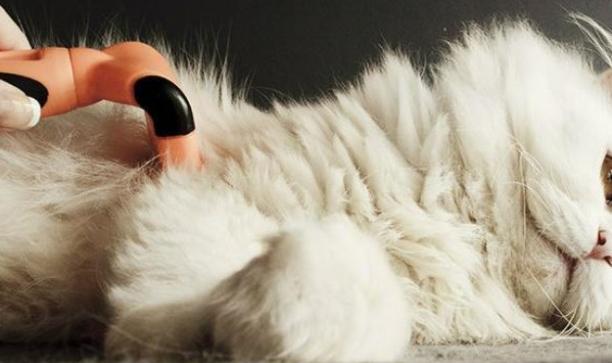 Menyisir dan menyikat bulu kucing