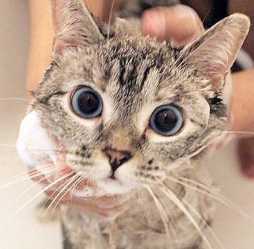 Shampoo Kucing Terbaik