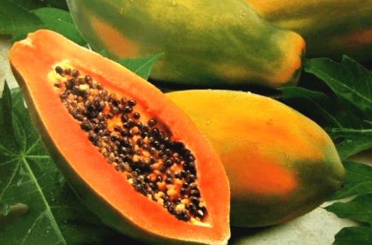 Buah-buahan yang Disukai Kenari