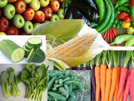 Sayur Sayuran Pakan Burung Parkit